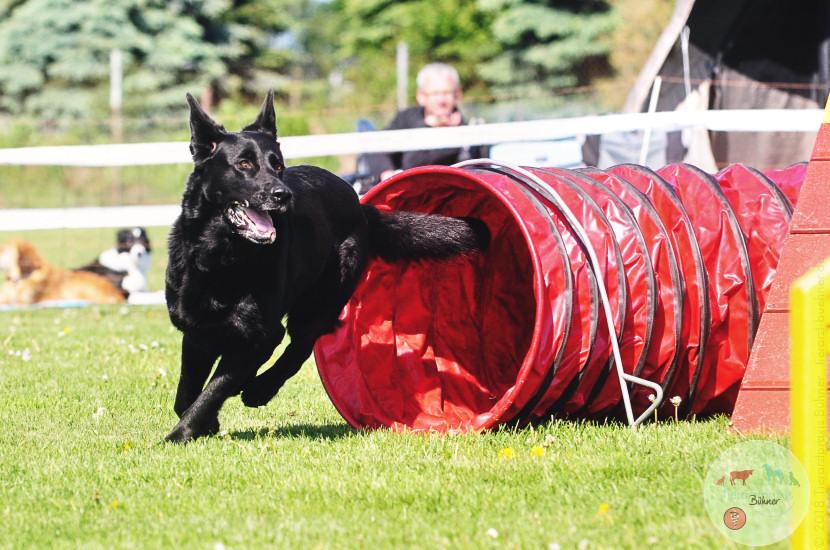 img_tierarztpraxis-buehner_dogtraining02
