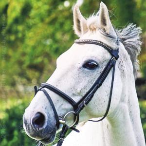 img_tierarztpraxis-buehner_Pferd-Willi
