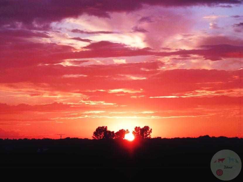 img_tierarztpraxis-buehner_sunset